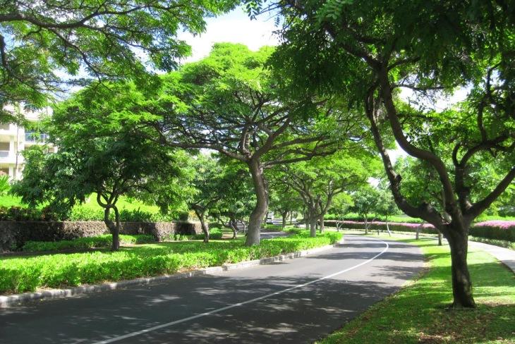 3cf1e-hawaii_37